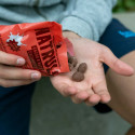 Cacao & Nuts con Leche - Cacahuete recubierto de Chocolicious con Leche | 150g